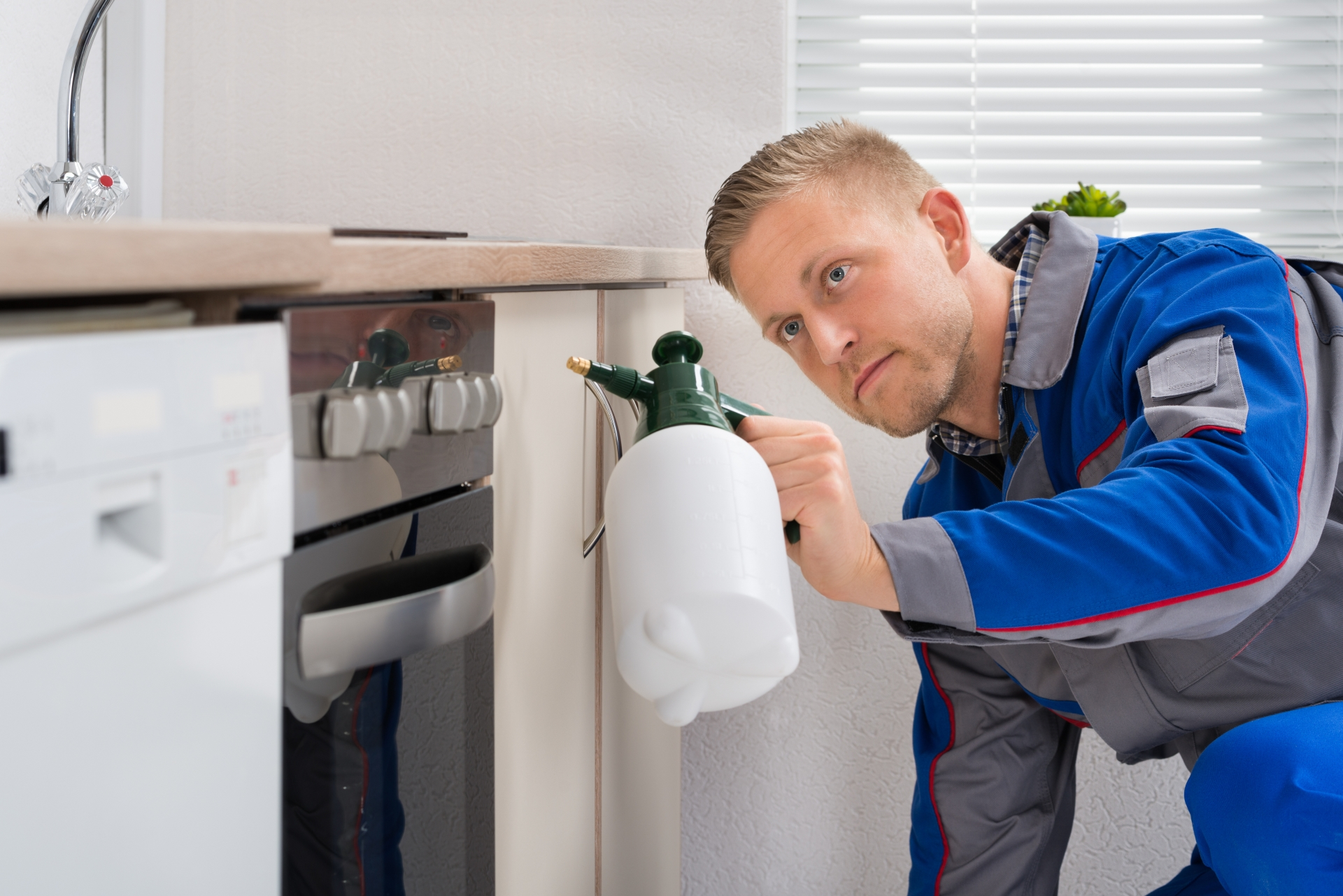 Pest Inspection, Pest Control in South Norwood, SE25. Call Now 020 8166 9746