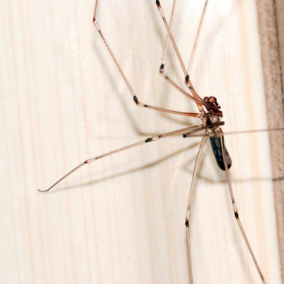Spiders, Pest Control in South Norwood, SE25. Call Now! 020 8166 9746
